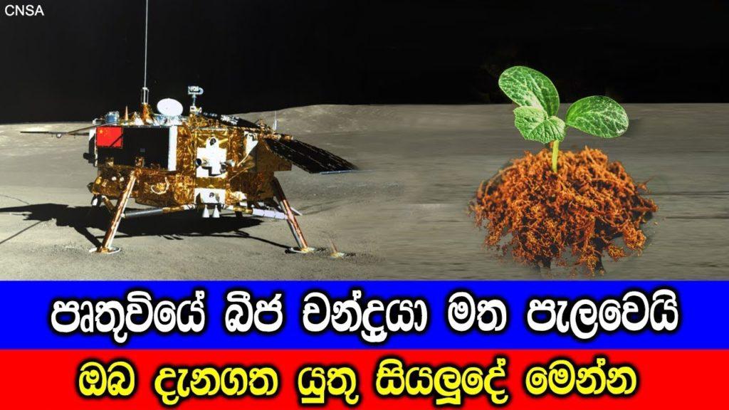 Cotton plant on Moon